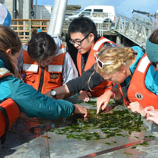 students on a ship looking at kelp